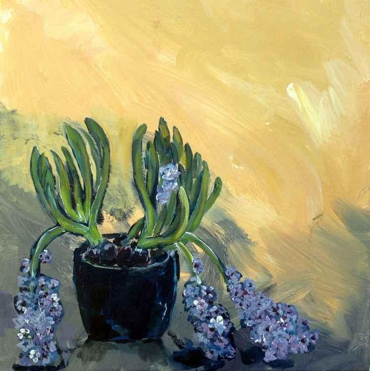 Fallen Hyacinths -