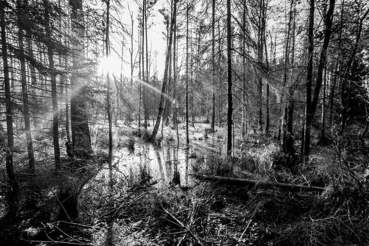 Landscape18 -