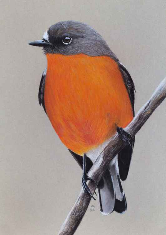 "Original pastel drawing ""Flame robin"""