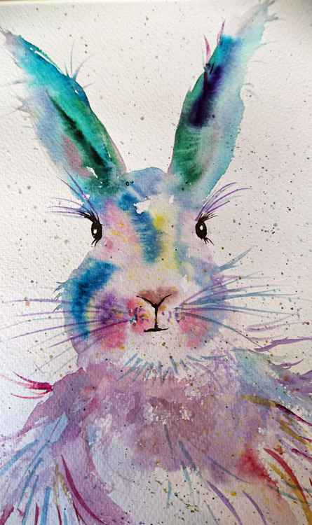 Rabbit in colour -