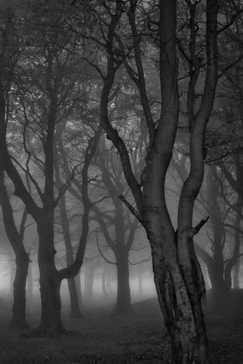 "Moonlit Copse  - 40x60"" Limited Edition Large Canvas Print"