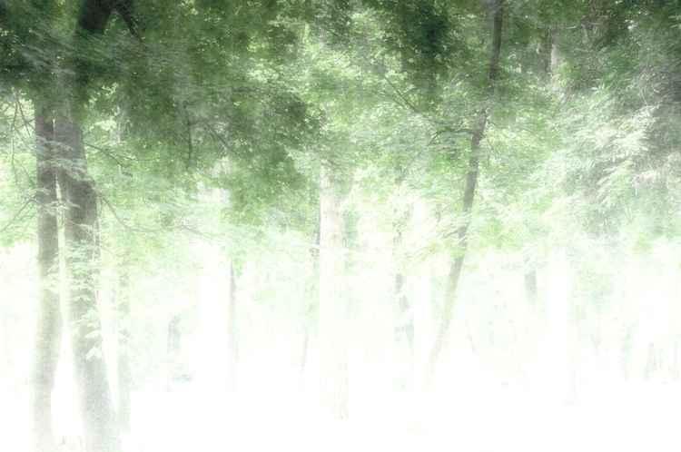 Greenery -