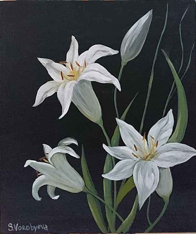 White Lily -