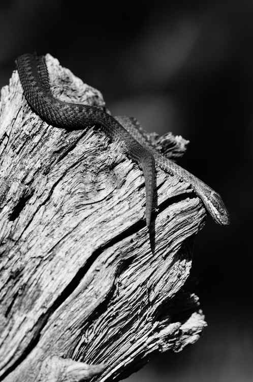 The snake, and it secret eye -