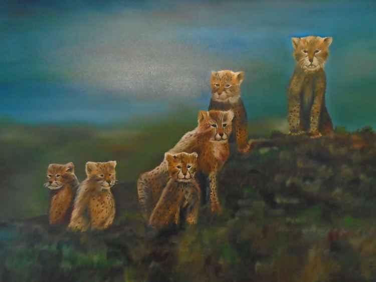 Little Wild ones -