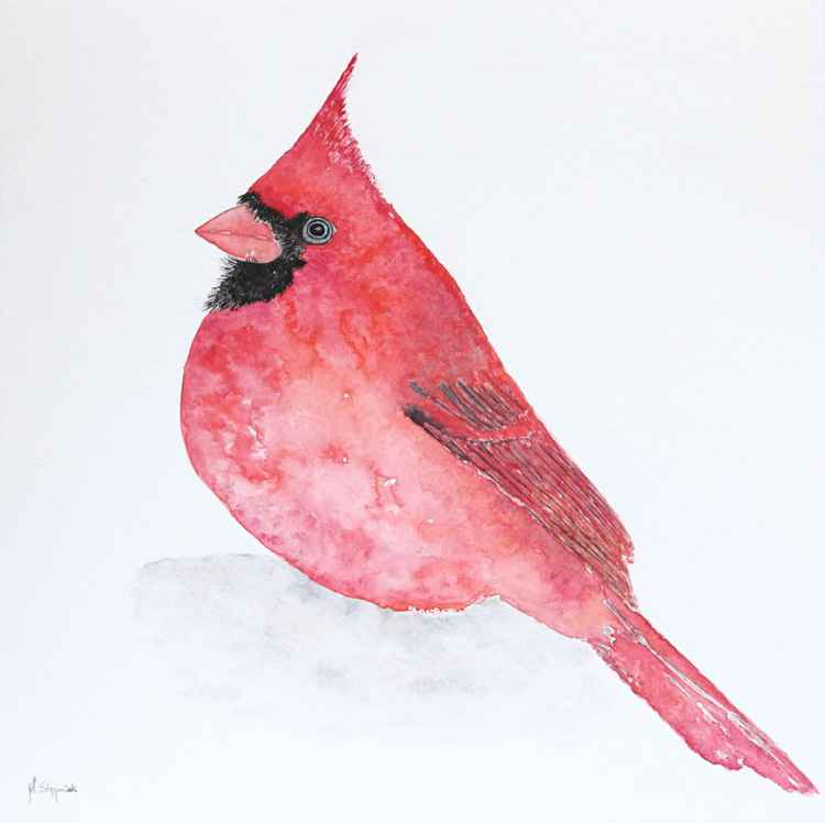 The northern cardinal (Cardinalis cardinalis) -