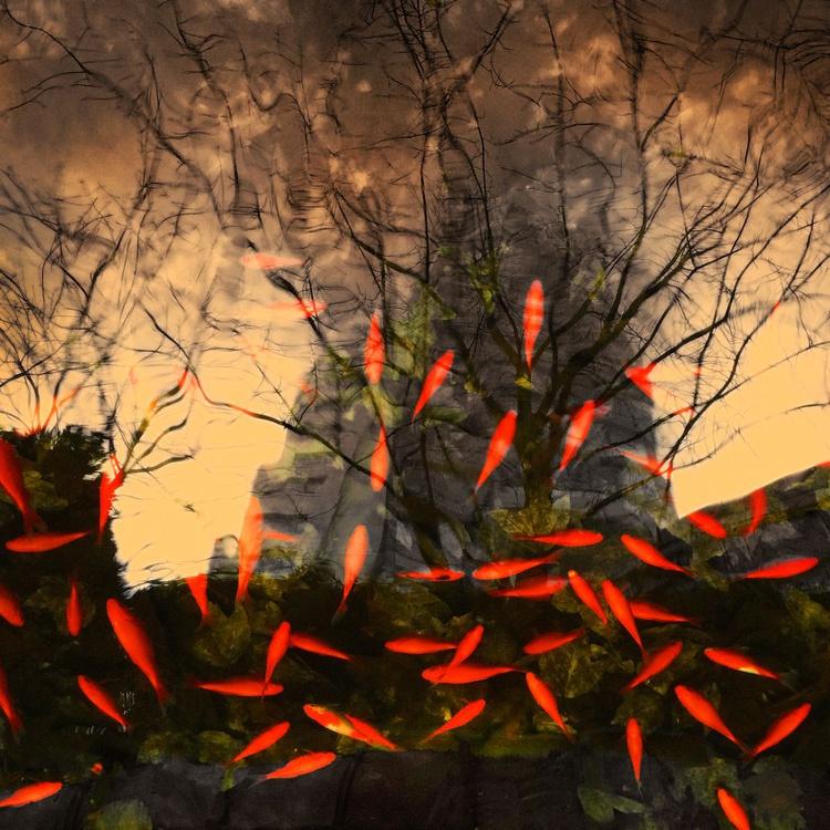 Reflection With Goldfish - Monoprint - Image 0