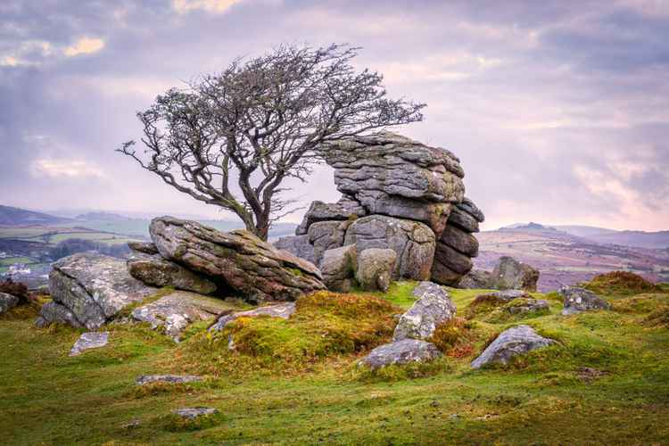 Hawthorn Tree And Granite Outcrop, Saddle Tor, Dartmoor, Devon -