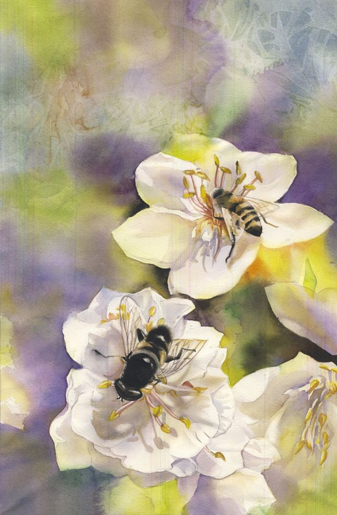 a pair of bees with pear blossom - Image 0