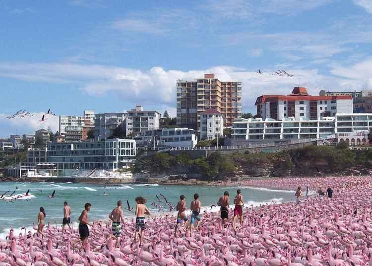 Bondi Beach Australia Climate Change