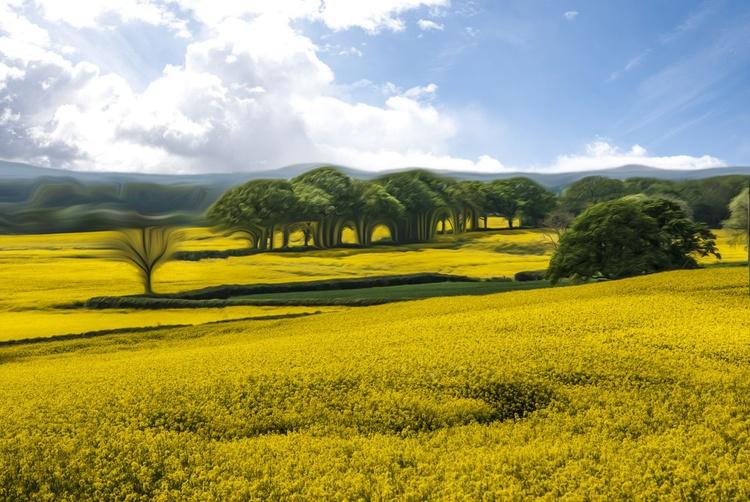 Yellow Carpet - Image 0
