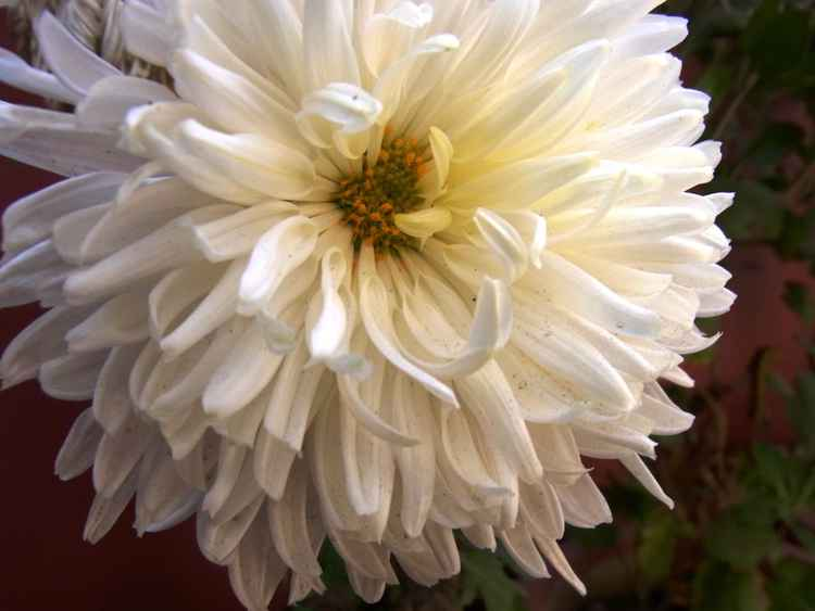FLOWERS OF PEACE -