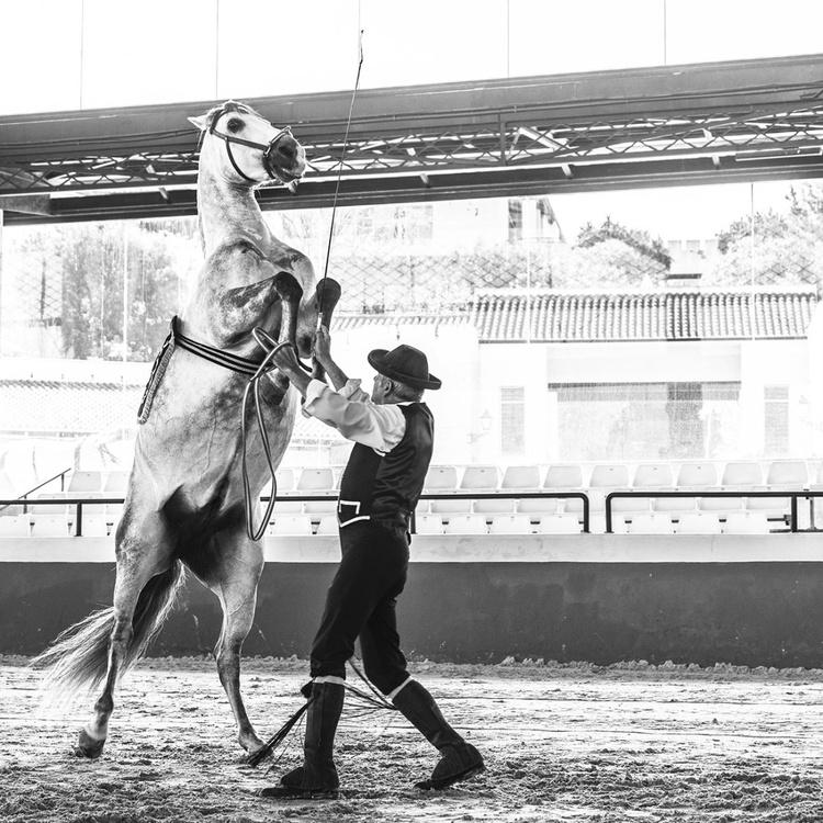 SPANISH HORSES 3 - Image 0