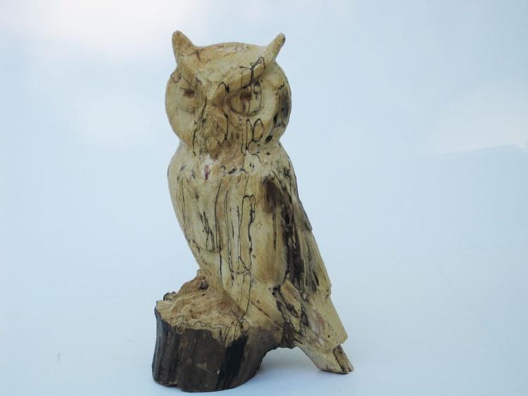 Little Owl - Image 0