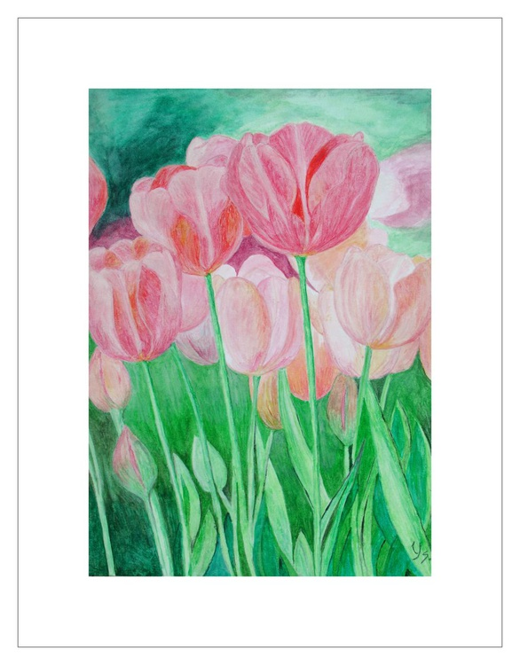 The Pink Tulips - Image 0