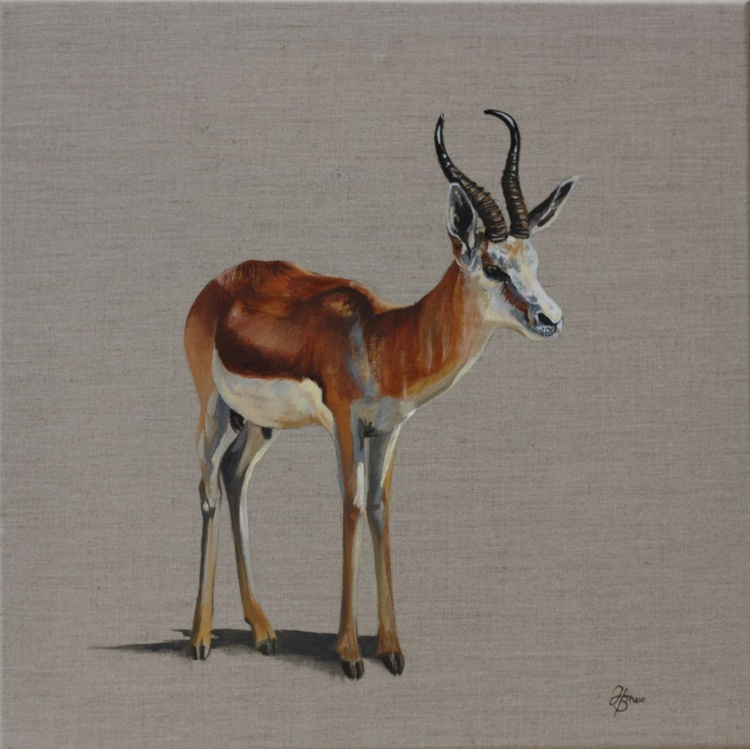 Gazelle - Image 0