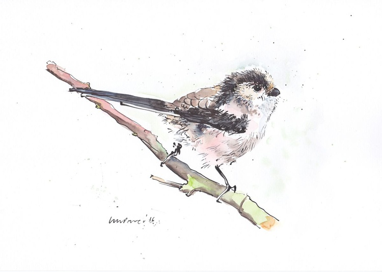 Long tailed Tit - Daily Bird #18 - Image 0