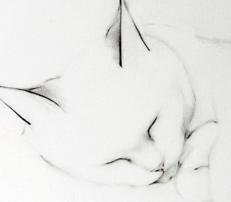 Feline Peace - Image 0