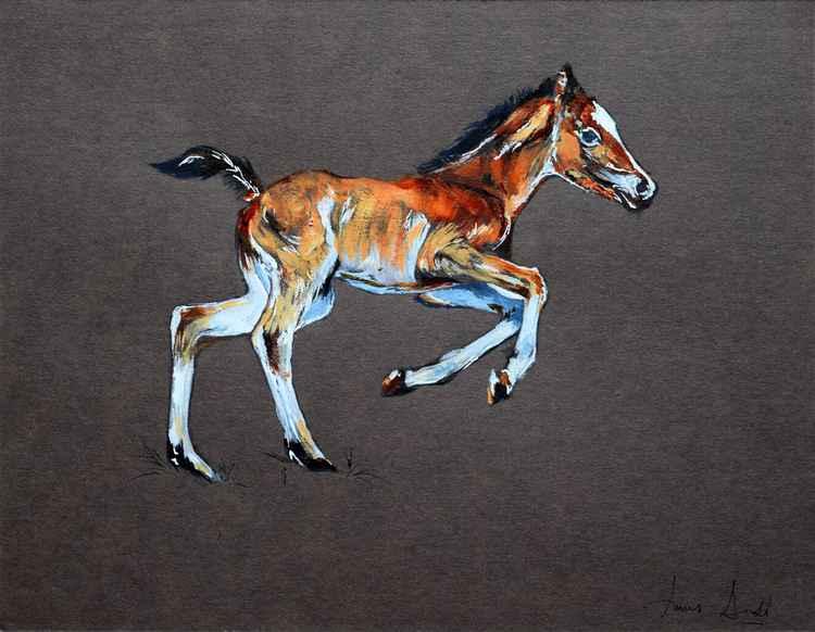 Foal -