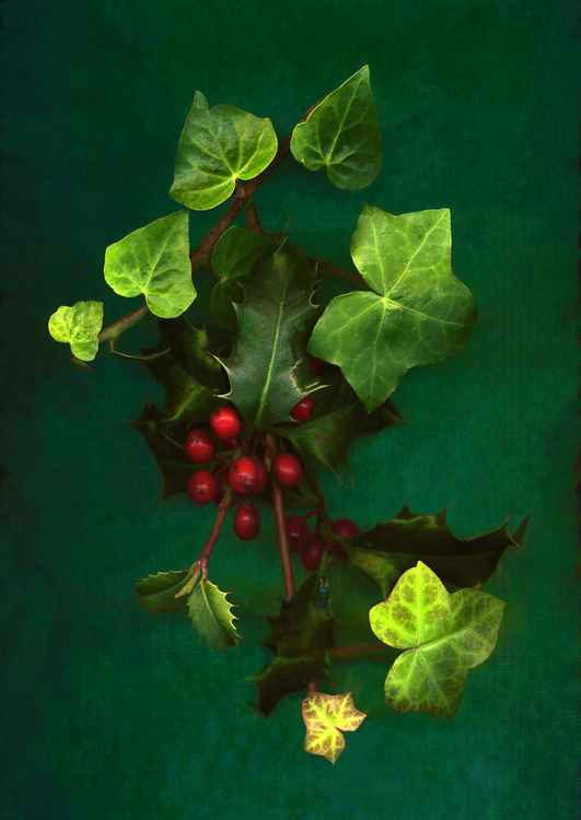 The Holly and the Ivy -