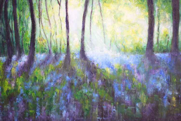 Bluebell walk -