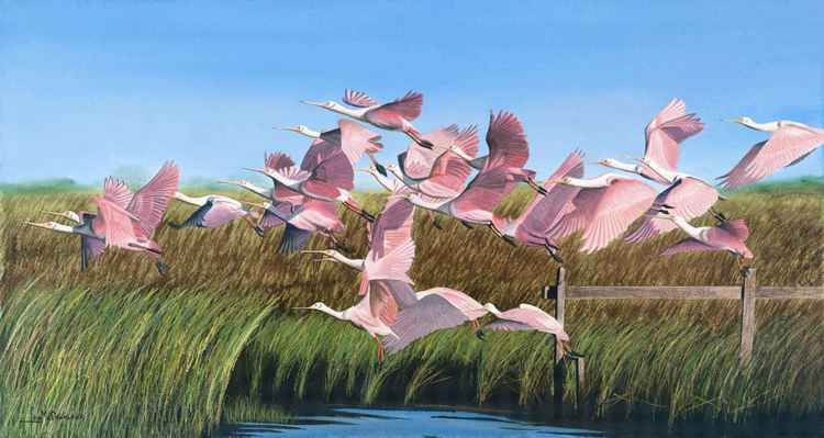 Tidal Flat Roseates -