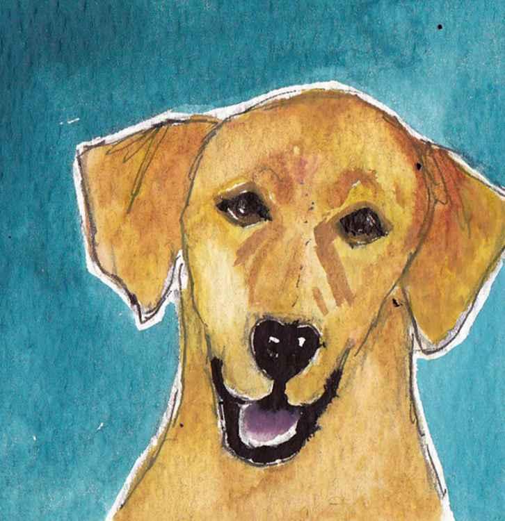 Golden Labrador -