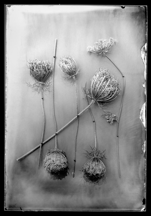 Flower Composition - Image 0
