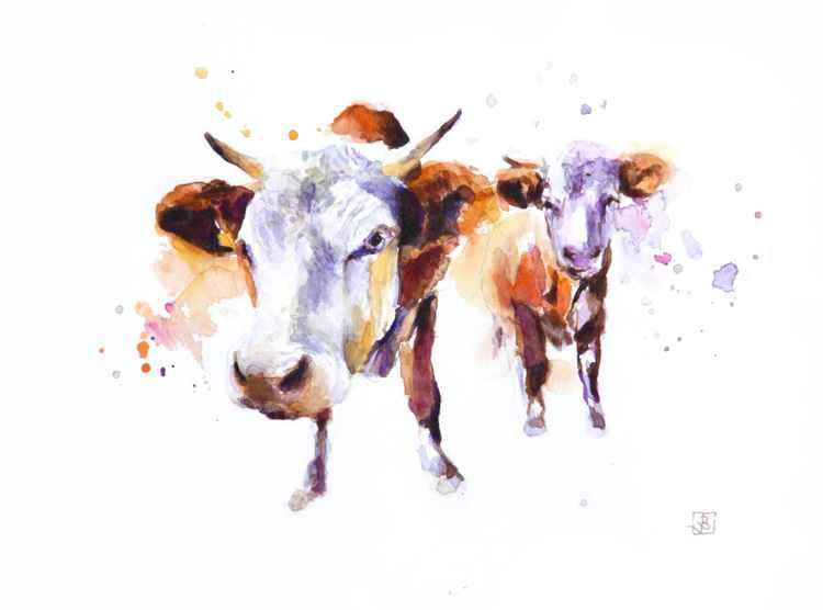 Cows -