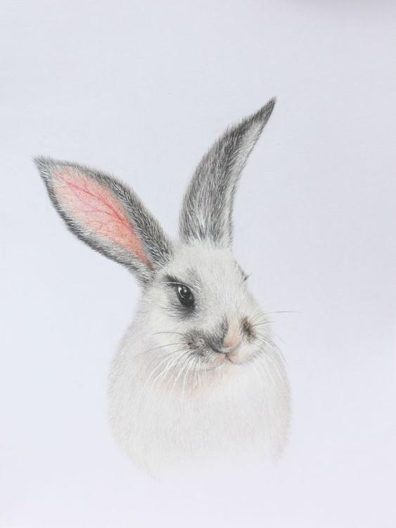 Fluffy bunny - Image 0