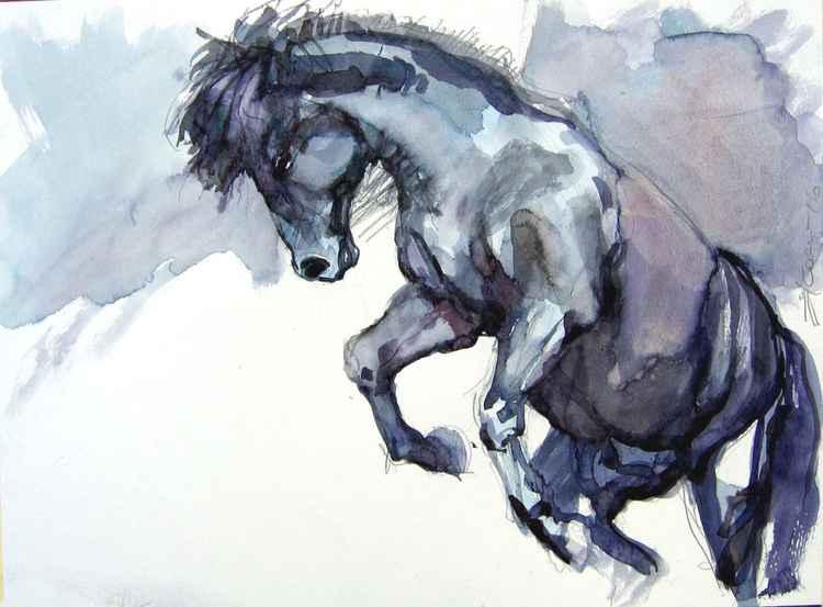 black stallion III