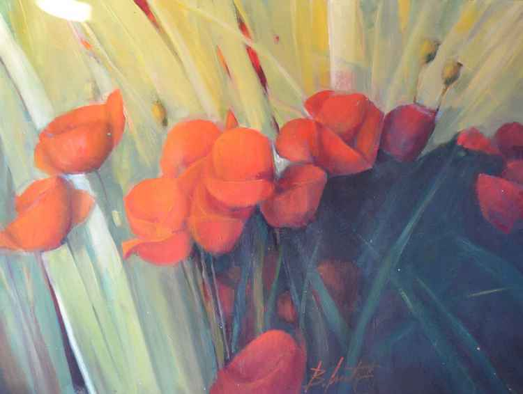 fire poppies -