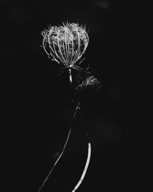 wild beauty 1 - Image 0