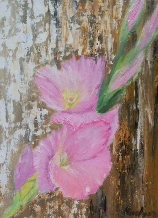 Pink gladiolus -