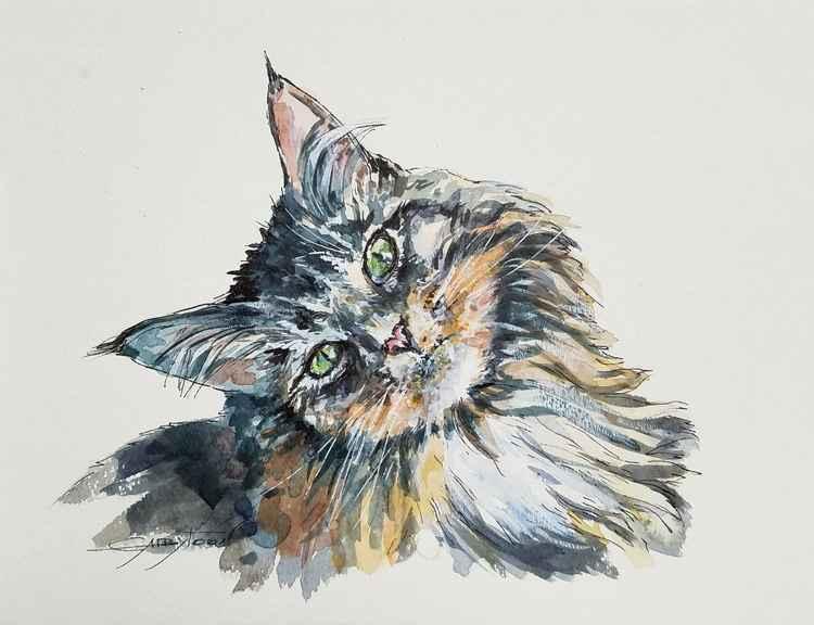A Cat -
