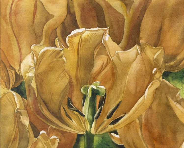 The Golden Tulips - Image 0