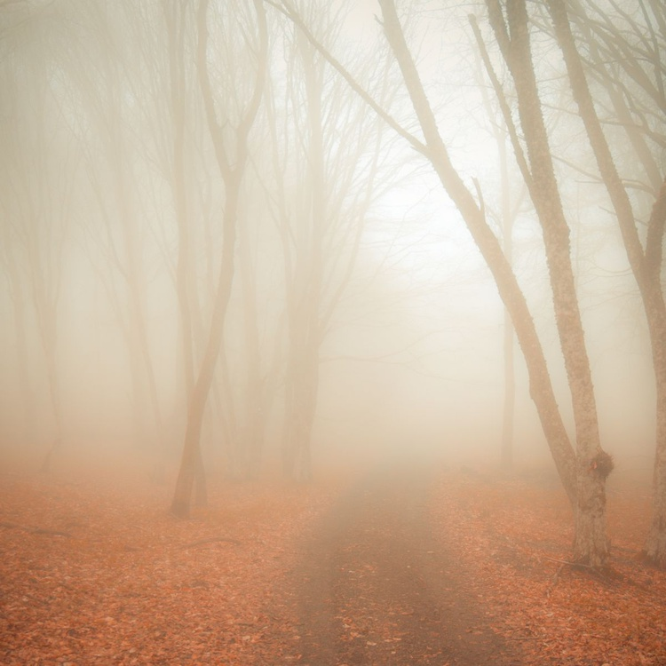 Fog in the forest. - Image 0