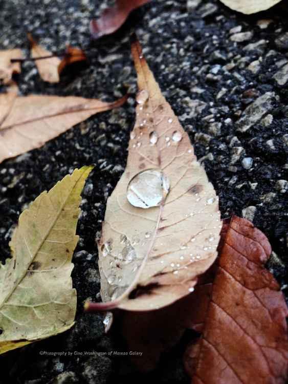 Dew Drop #2 -