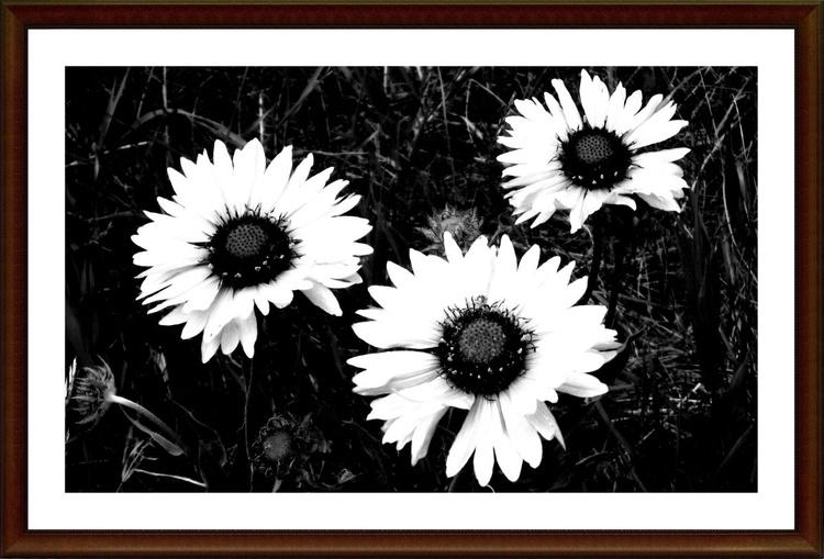 Morning. Freshness. Flowers. - Image 0