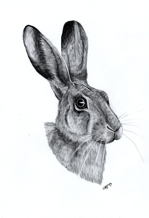 March Hare - Image 0