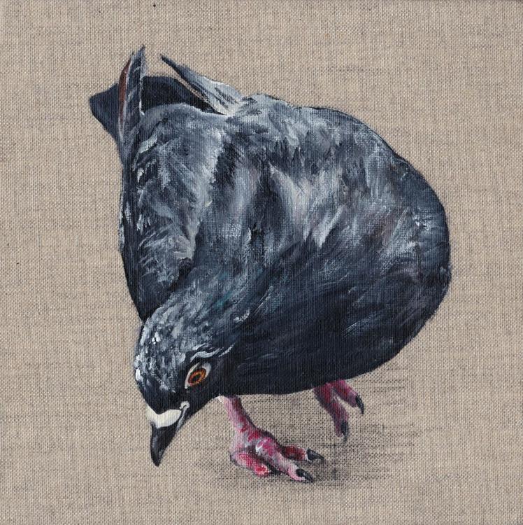 Pigeon 0009 - Image 0