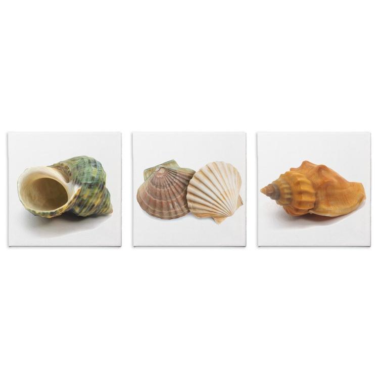 Seashells | Modern Nautical Seashell Art, Giclée Print on Canvas - Image 0