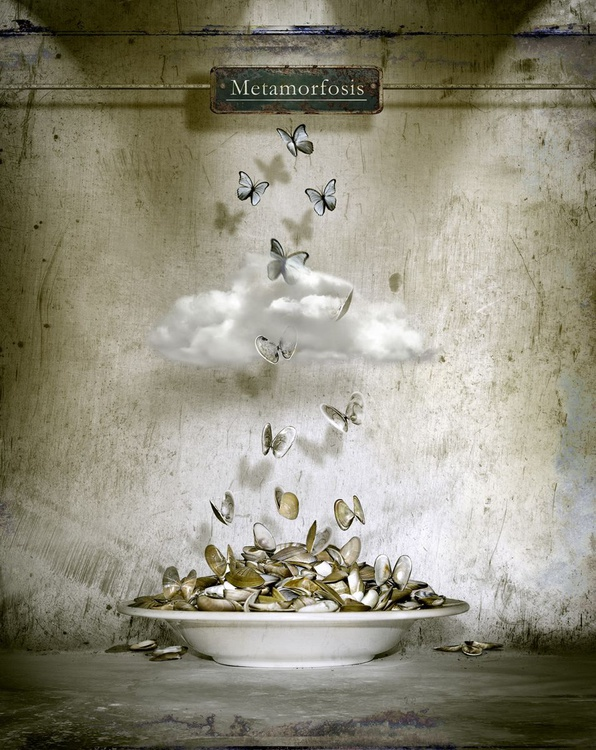 Metamorfosis - Image 0