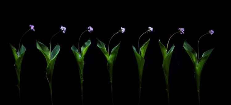 Floristics #1. From   the series Floristics -
