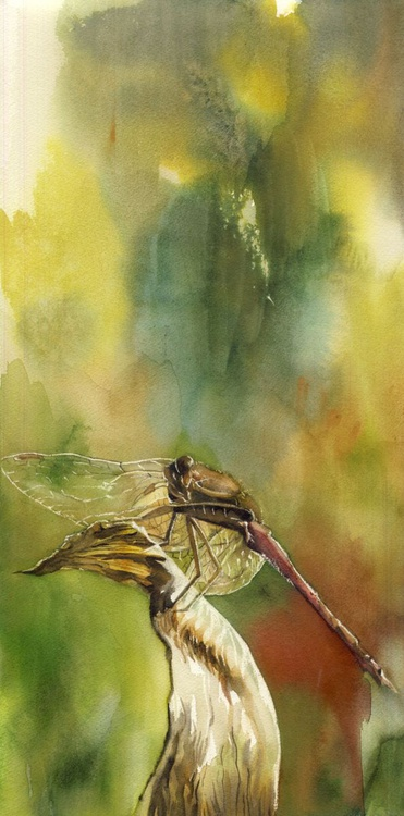 Dragonfly in autumn - Image 0