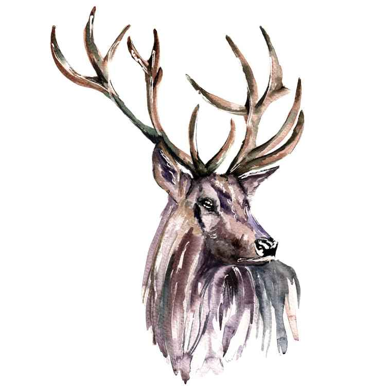 Stag 11