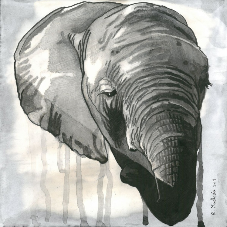 Elephant Carved IV - Image 0