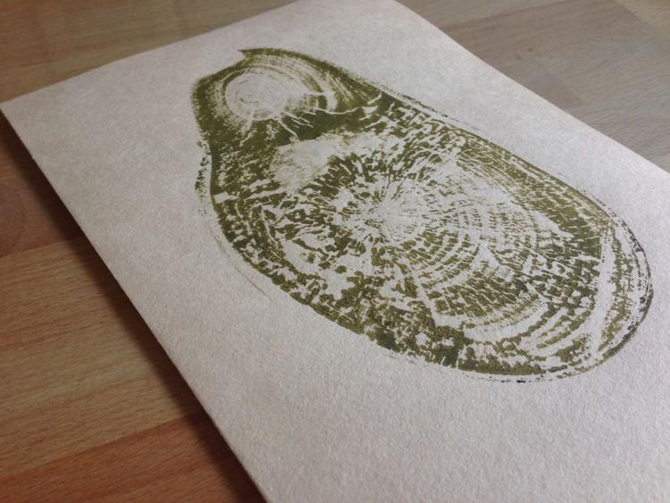 Betulus pendula - Image 0