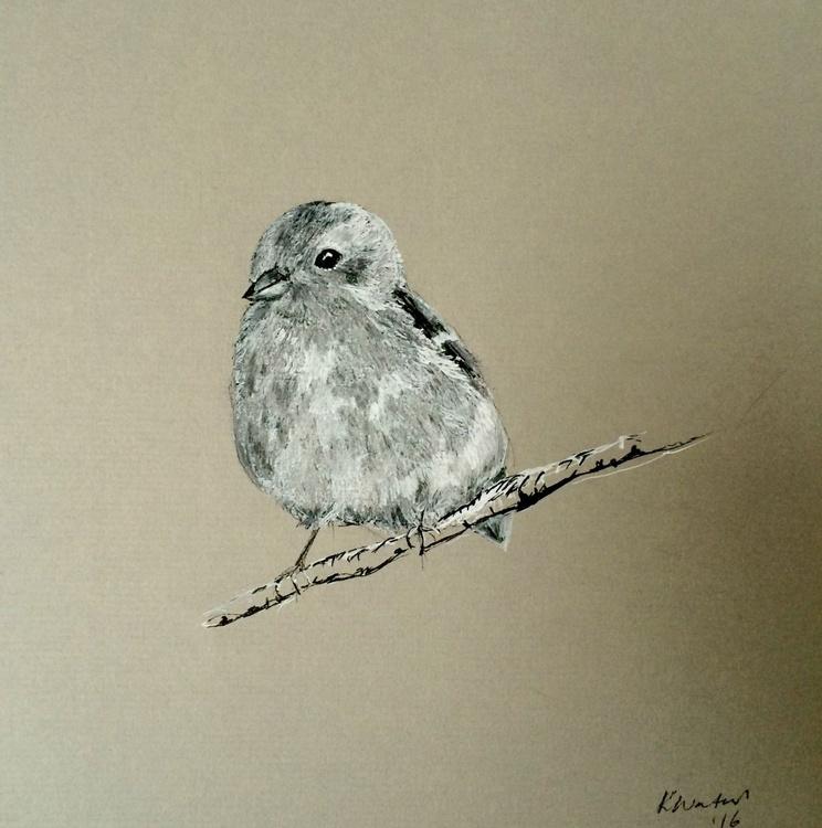 Female Chaffinch - Image 0