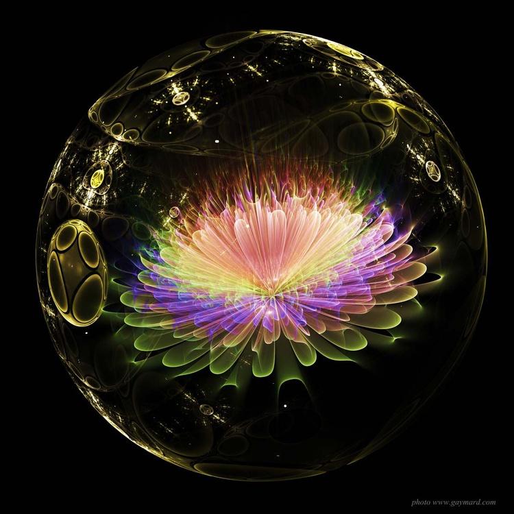 The multicoloured flower - Image 0
